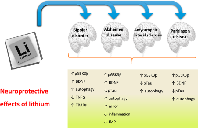 Efectos del Litio a nivel Neuroprotector