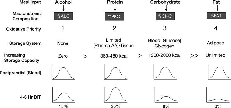 Prioridad oxidativa y obesidad